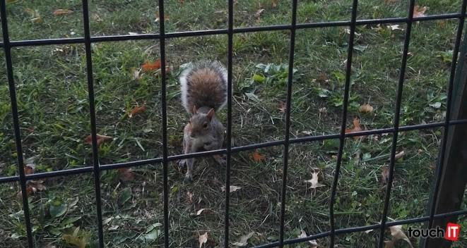 Veveričky v Central Parku sa neboja ani nehanbia